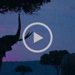 Protegen a los elefantes de Kenia desde el cielo #Responsabilidadsocial