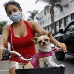 """Prepara a tu Mascota Para el Regreso a la """"Nueva Normalidad"""" #MARKETING"""